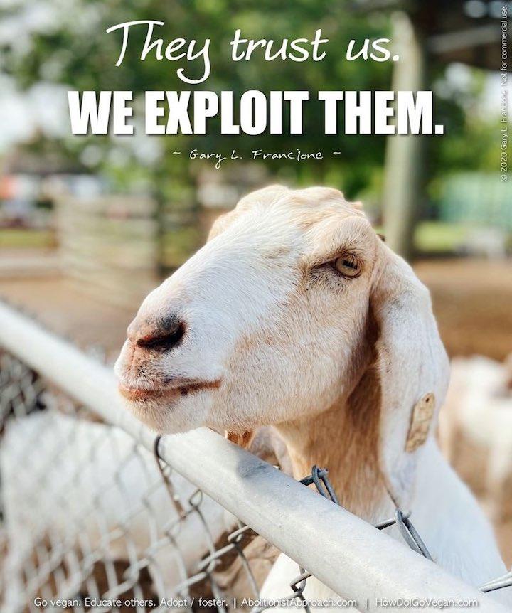 """""""Hayvanlar bize güveniyor. Biz onları sömürüyoruz"""". Gary. L. Françione"""