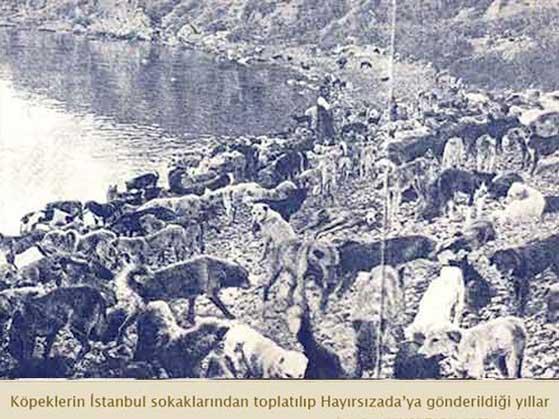 İstanbul'da yaşanan köpek katliamı